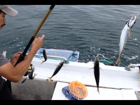 SABIKI RIG Xem Cách Thức buộc Tóm lưỡi câu kim tiến Bằng Mồi Giả câu cá ngừ rang cá nục bong CENCARU