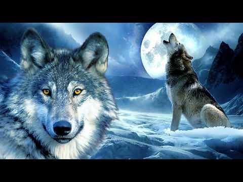 Сын волка.Д.Лондон.