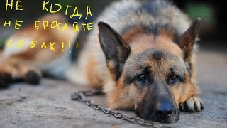 грустная история собаки СМОТРЕТЬ ВСЕМ!!!
