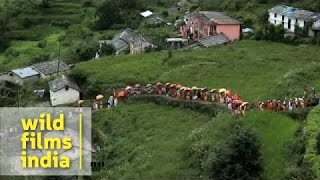 Nanda Devi Raj Jat Yatra 2014 : best imagery