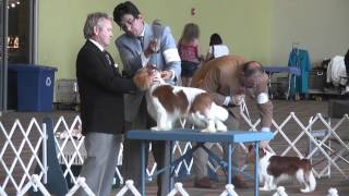 Bluegrass Classic Dog Shows - Alltech Arena- Cavalier King Charles Spaniels