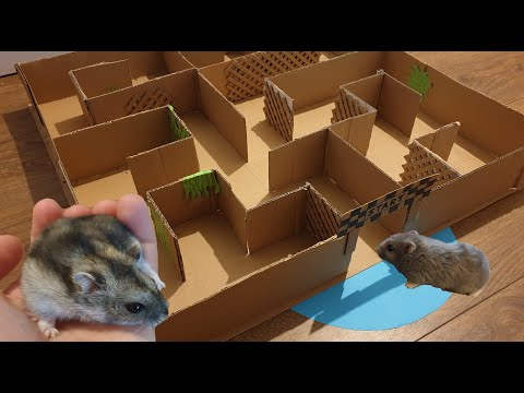 Hamster MAZE experiment. Can they exit ?