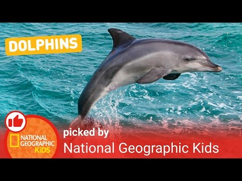 All About Dolphins | Nat Geo Kids Dolphins Playlist