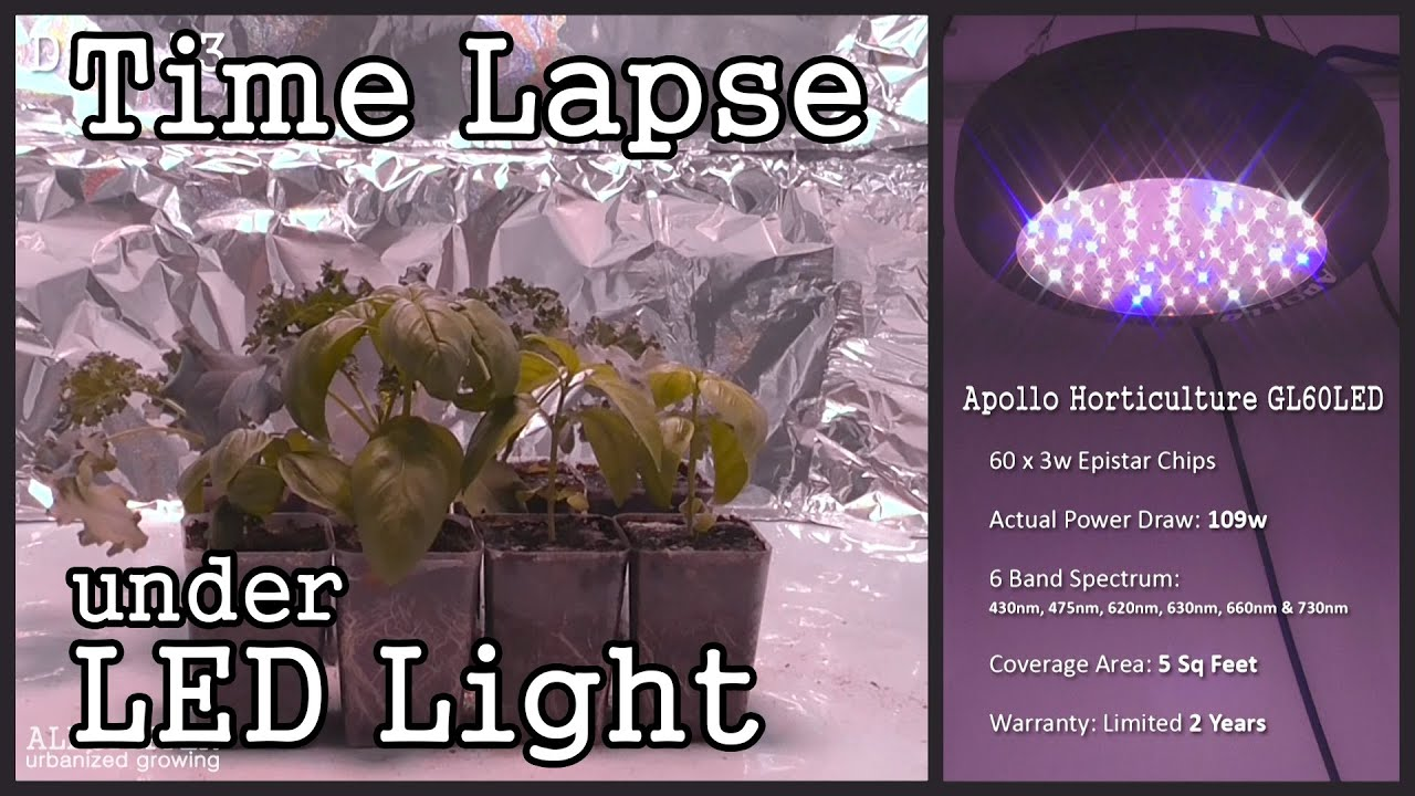 Kitchen Grow Lights Time Lapse Ufo Style Led Grow Light With Seedlings Basil