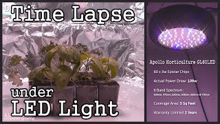 Time Lapse: Ufo Style Led Grow Light With Seedlings (basil, Lettuce & Kale)