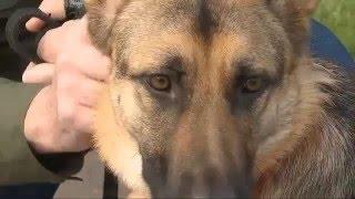 Northwest Battle Buddies - Preparing Dogs for Veterans
