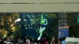 [台北市 - 士林區天母] 大葉高島百貨的餵魚Show - 22/6/2013