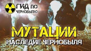 Животные мутанты Чернобыля - шокирующие кадры мутаций после аварии на ЧАЭС