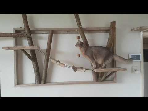 Catshouse!