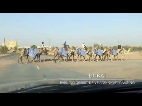 Travel: Desert camp – Dubai #desertdrive #dubailife #dunebash #travncars