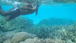 Snorkeling in the Solomon Islands