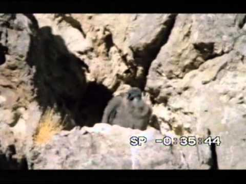Airways Airsports - BBC's Flying With Condors part 1