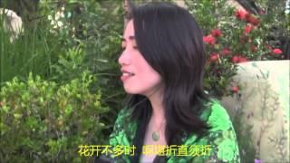 女人花- 梅艳芳 Covered by : Qunliang  Music by : Akatomie