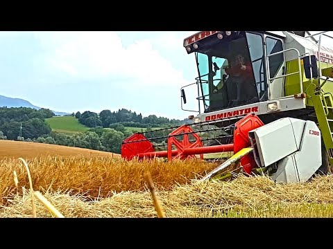 Wheat harvest 2017 - SLOVENIA
