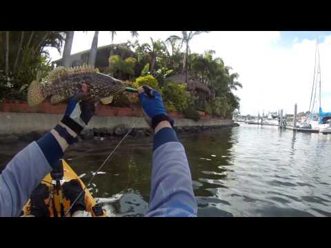 Fishing for Mangrove Jack & Estuary Cod from Hobie Kayak - Queensland