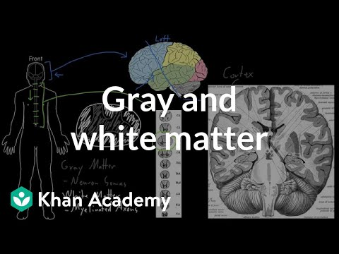 Gray and white matter | Organ Systems | MCAT | Khan Academy