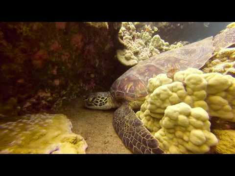 Molokini Crater and Turtle Reef Dive