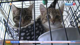 «День котика» в Пензе