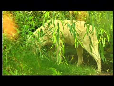 Inishkea - Black Wolf (Pickering Pick)