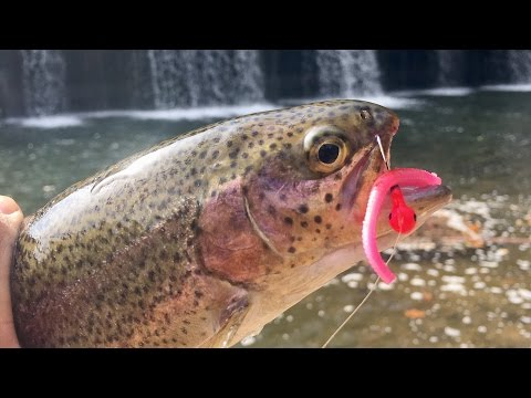 45 Minute TROUT Fishing Challenge!!!