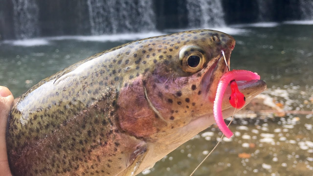 45 minute trout fishing challenge youtube for Trout fish pictures