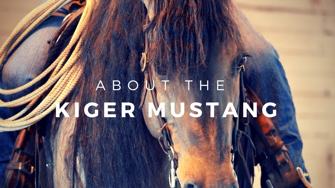 About The Kiger Mustang