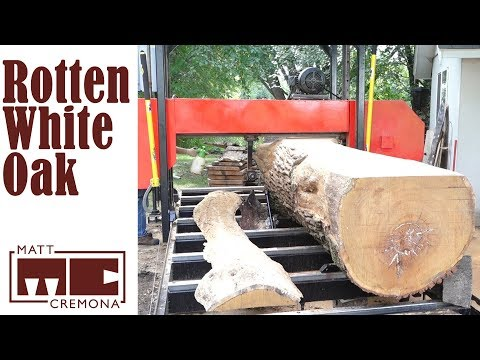 Sawing A Rotted Out White Oak