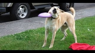 410 seconds of laughter! Laughed - Like! Best jokes! Funny animals) | LMAO Moments #11
