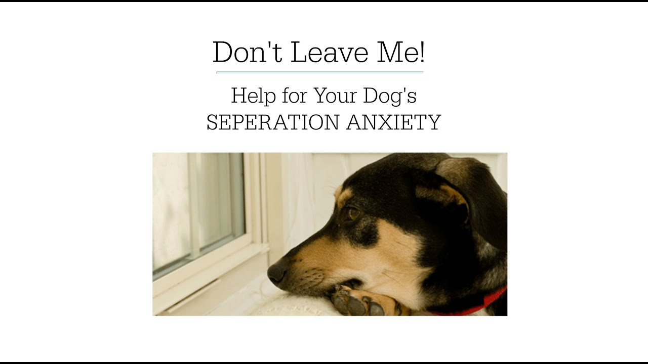 separation anxiety in dogs help | tips on how to cure a dog of