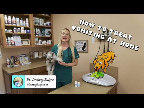 How To Treat Vomiting At Home? | Vomiting Dog?