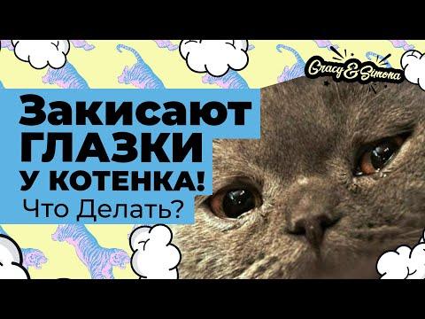 Вопрос: Как вылечить котятам глаза?