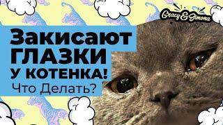 Что делать если у котенка закисают глазки ?