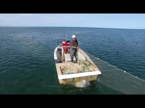 The Fish Factory - Commercial Net Fishing