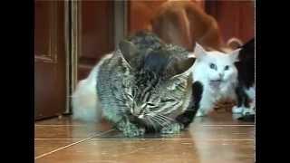 50 кошек и собак в одной квартире