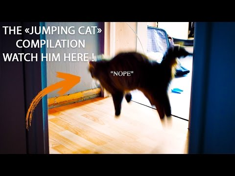 Cat jumping compilation