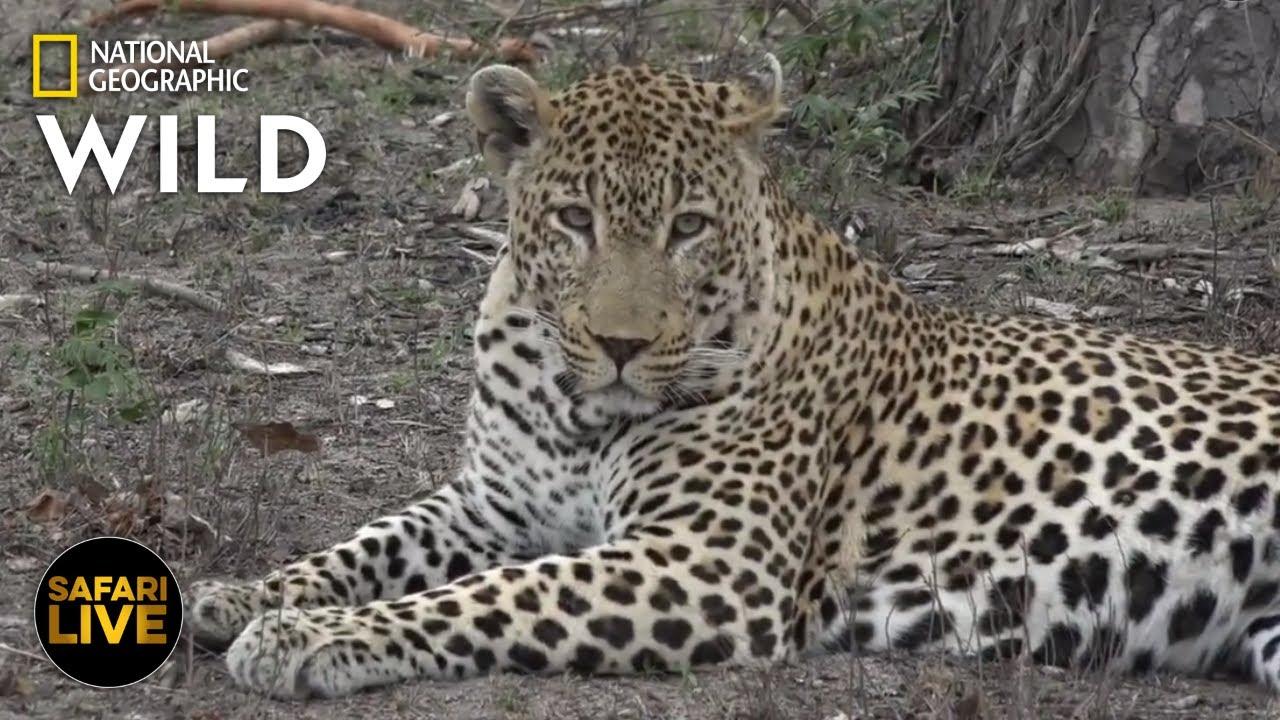Safari Live - Day 268 | Nat Geo Wild