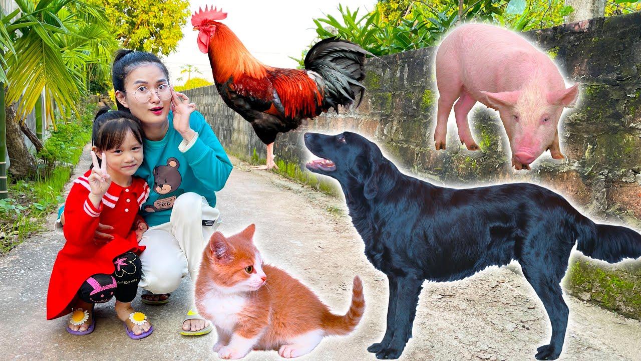 Changcady giới thiệu các con vật nuôi : con mèo, con gà, con chó, lợn - Part 312
