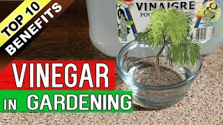 VINEGAR in GARDENING - Top 10 Proven Benefits of Vinegar for Plants