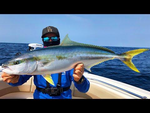 BAIT VS. JIGS - What Catches Bigger FISH??