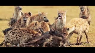 Kenya Trip 2018 - Masai Mara Safari & Wildlife Photography Highlights