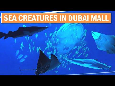 Dubai aquarium (sharks, stingrays) – (دوبی ایکویریم)