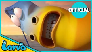 LARVA - BEST OF LARVA | Funny Cartoons for Kids | Cartoons For Children | LARVA Official WEEK 8 2017
