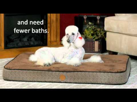 How Often Should You Bathe Your Dog, Wash Your Dog Bedding and Dog Crates