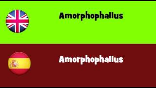 FROM ENGLISH TO SPANISH = Amorphophallus