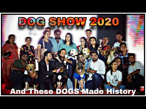 dog-show-2020-|-paw-tales-training-center-made-history-with-dogs