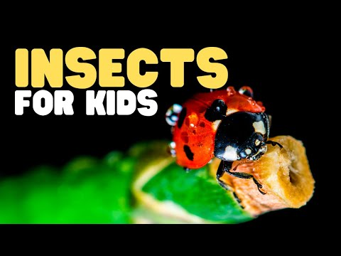 Insects for Kids   Have fun learning all about different kinds of bugs!   Parts of an insect