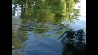Рыбалка на малых реках Черноземья. Вываживание сома.