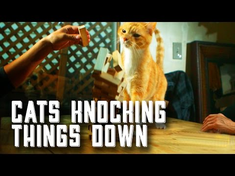 Cats Knocking Things Down - A Film by Friskies