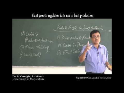 Plant growth regulator & its use in fruit production