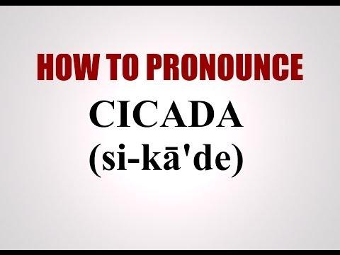 How To Pronounce Cicada